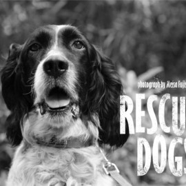 KDP KANAGAWA DOG PROTECTION, 藤代冥砂 - RESCUED DOGS Calendar 2013 A4壁掛けタイプ