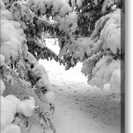 Fine Art America - Under Cover Acrylic Print By Svetlana Sewell