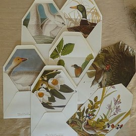 sideshow press - envelopes lined w/ page from the Audubon book.