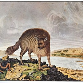 aloys zotl - The Striped Hyena (1831)