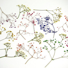 Stem Real Dried and Pressed Flowers