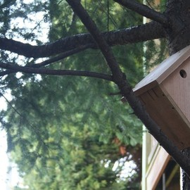 birdloft - Tiptoe House, upcycled for songbirds, all fresh and planed wood - Pacific Northwest cedar
