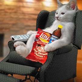 cat - couch potato