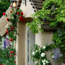 Lantern above entrance - wisteria and roses