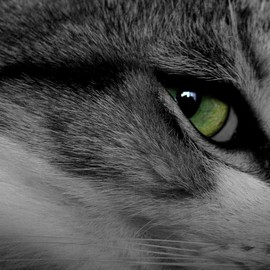 Fine Art America - Cat eye Photograph  - Cat eye Fine Art Print
