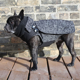 Babies & Beasts - The City Coat - Adult Boys French Bulldog/Pug Dog Winter Coat