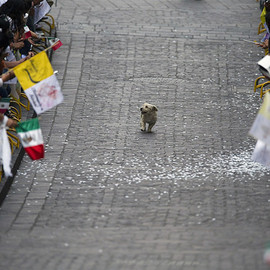 dog - dog runs through a parade