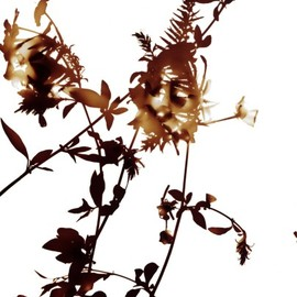 JAMES WELLING - Flowers