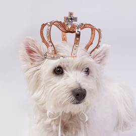 SunGoddessCollars - Leather dog crown with stone & studs