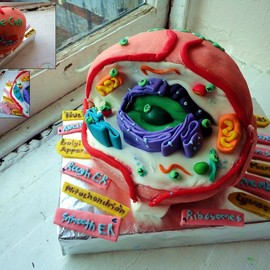 Biology Cell Cake