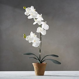 Pottery Barn - White Orchid