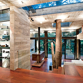 Living room - Living room with a Tree going through the house