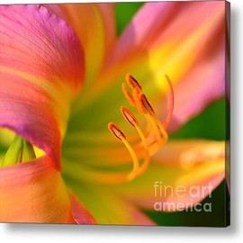 Fine Art America - Pink And Yellow Acrylic Print By Kathleen Struckle