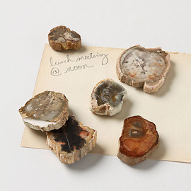 ANTHROPOLOGIE - Petrified Wood Magnets