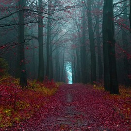 Germany - Hameln´s Forest
