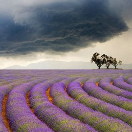 Provence, France - Lavendar fields and approaching storm, near Valensole, Provence, France