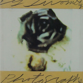 Cy Twombly - Cy Twombly: Photographs