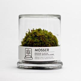 scientific glass moss terrarium and spray bottle