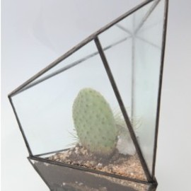 Assembly New York - Assembly New York Geometric Terrariums - Three