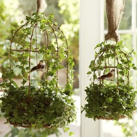 Pottery Barn - Live Ivy Bird Cage