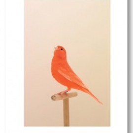 Luke Stephenson - An Incomplete Dictionary Of Show Birds