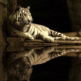 Animal in 50 Superb Examples of Animal Photography
