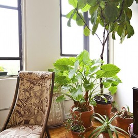 sewing chair and plants