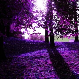 purple/Nature