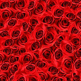 Heart Love Rose Flowers Backdrops Vinilos Red Valentines Backgrounds