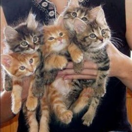 Handful of kittens