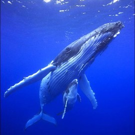 From the Earth - Humpback Whales.
