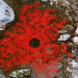 Andy Goldsworthy  - Japanese maple leaves stitched together to make a floating chain,  Ouchiyama-Mura, Japan 21-22 November 1987.