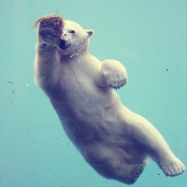 A Swimin' White Bear.(Sin título, via Flickr.)