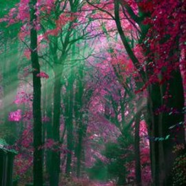 GREEN: PINK: forest