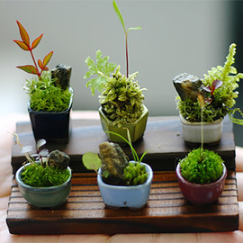Ultra Small Bonsai Plants Give New Meaning to the Word Miniature plants miniature Japan bonsai