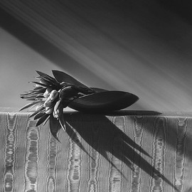 ROBERT MAPPLETHORPE - Tulips