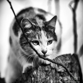 Fine Art America - Peek A Boo Kitty Photograph  - Peek A Boo Kitty Fine Art Print