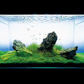 ADA - nature aquarium