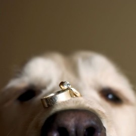 wedding - cute ring security