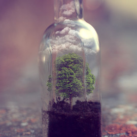 Small world in a bottle.