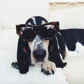 Dafne loves my @karen_walker sunnies 😎🐶