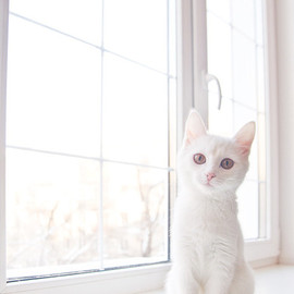 White Kitten in a white room♡
