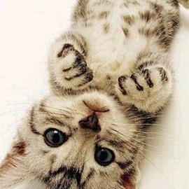 cutest kitty !