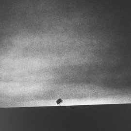 Edward Dimsdale - Little tree, big sky