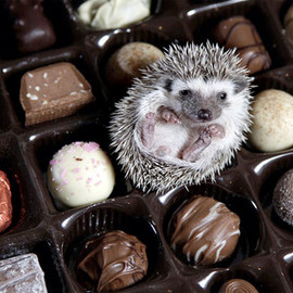 Sigh. If only life were as sweet as chocolate.