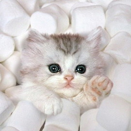 Kitty in the marshmallow