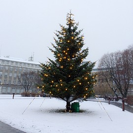 ICELAND - winter tree