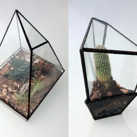 Assembly New York - Geometric Terrariums plants gardening
