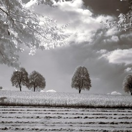 InGallery.com - Field With Trees - Horizontal by Ilona Wellmann Fine Art Canvas 28 x 22 in Gallery Wrap Wall Decor