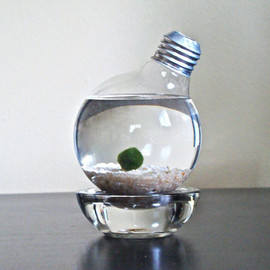 eGardenStudio - Marimo Moss Ball in a Repurposed Light Bulb